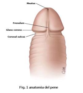 Come aumentare un pene in lunghezza e volume